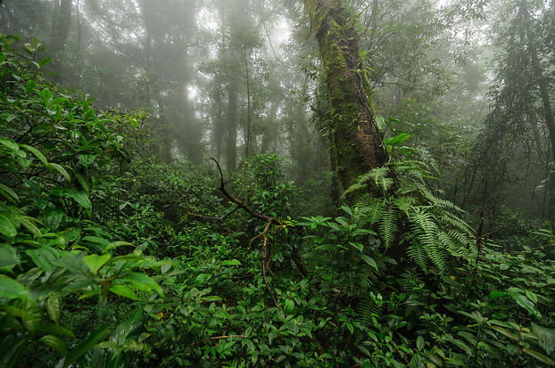 dense-mystic-green-forest-with-fog-morni