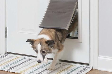 dog door installed