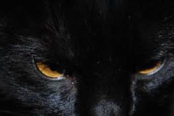 Meet Basement Cat