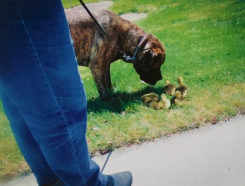 Dog Gone Cute-Digital Imagery