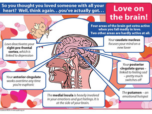 Love on the Brain! How do Scientist Know?