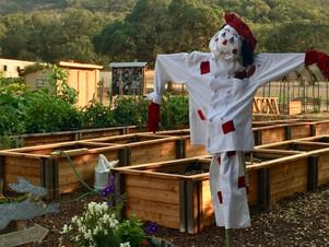 Tug McGraw Brain Garden Chosen for Bay- Friendly Garden Tour