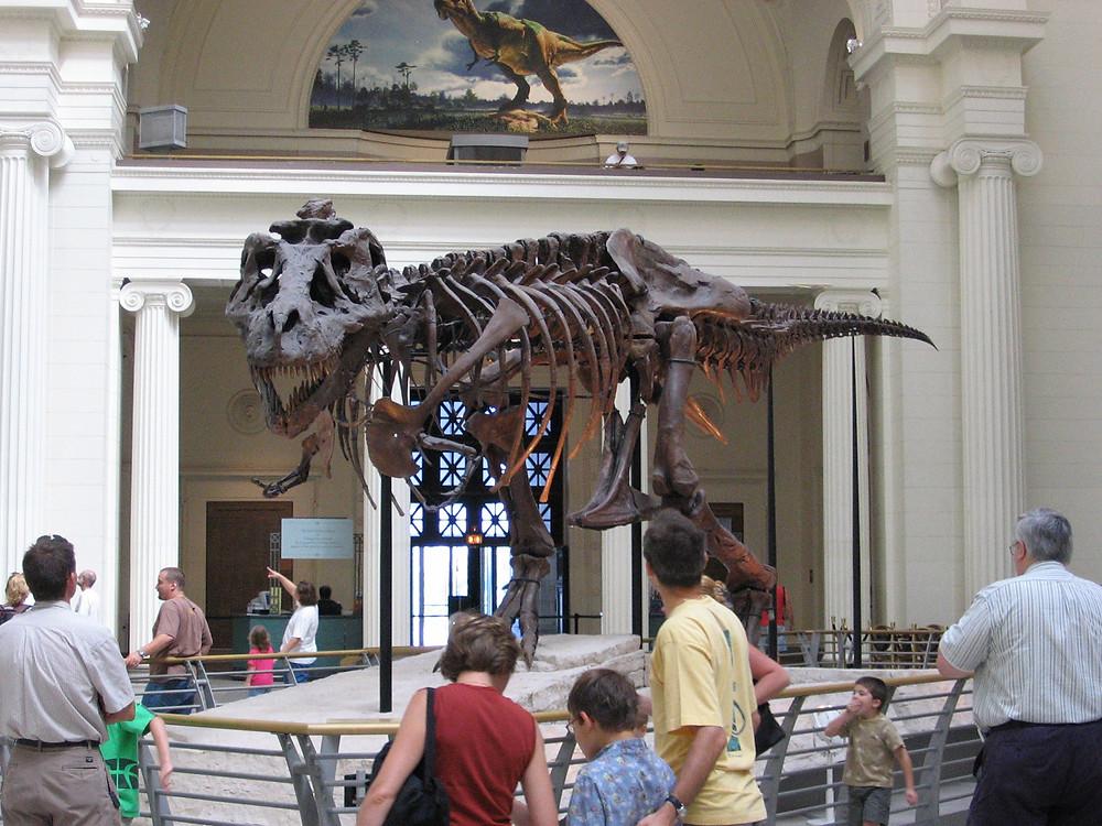 field_museum2.jpg