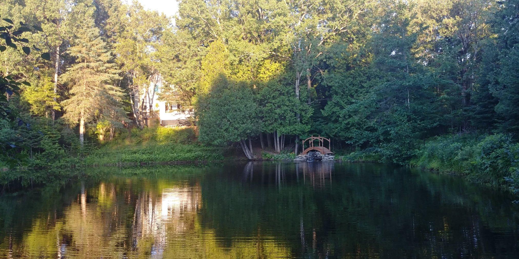 petit pont et chute sur l'étang