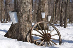 maple-syrup-116989896