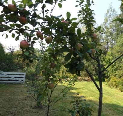 quelques bons fruits en saison