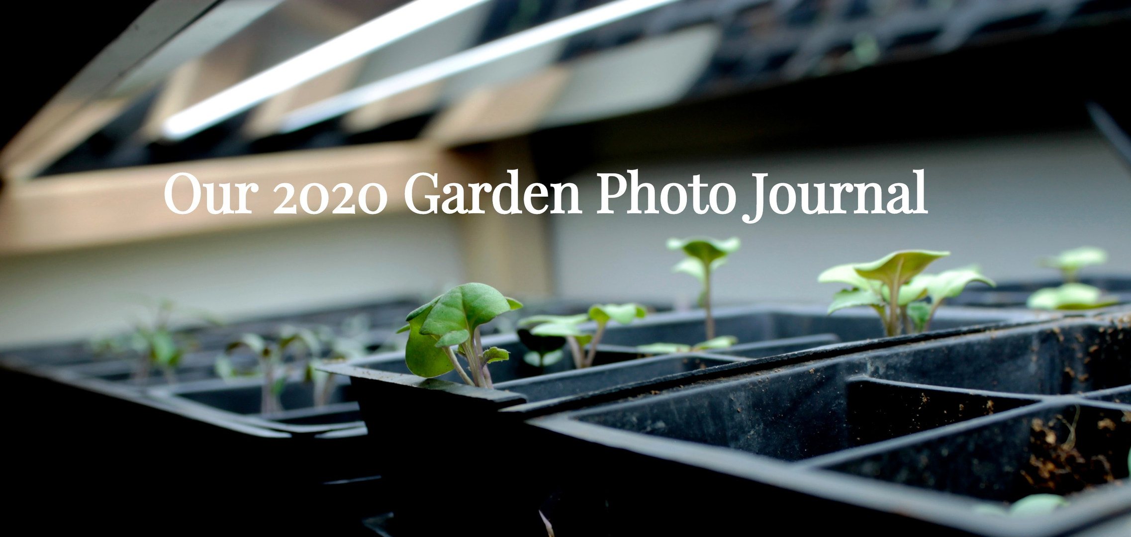 2020 Garden Photo Journal