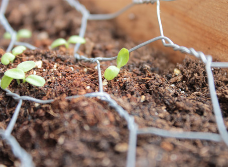 Liturgical Gardening