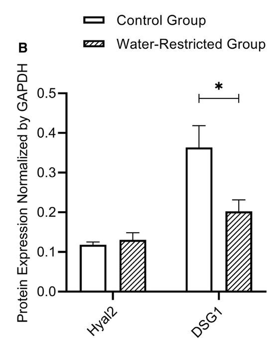 Restricted Water Intake Adversely Affects Rat Vocal Fold Biology