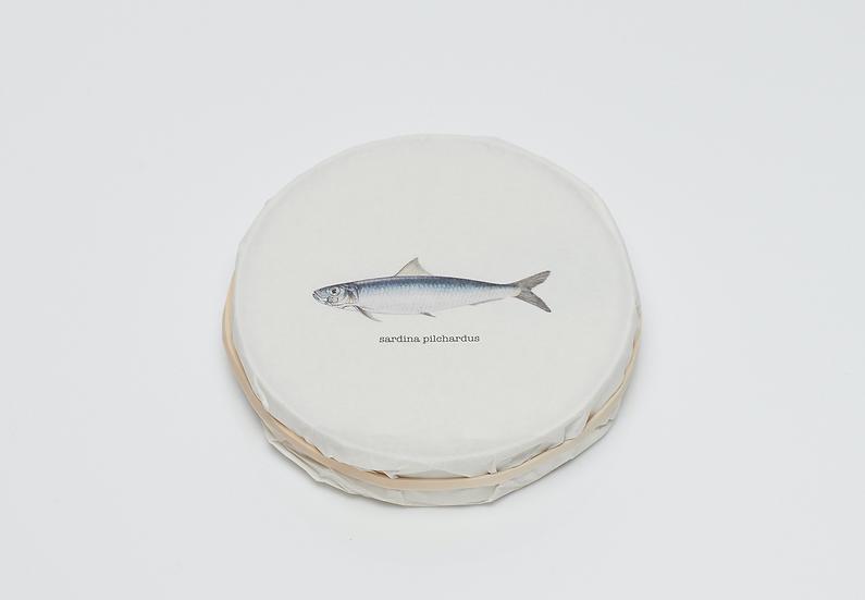 'Taste' Sardines (2020)