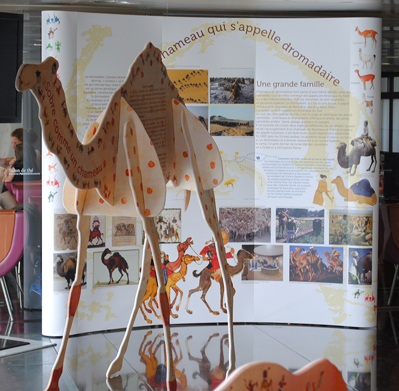 SUPPORT EXPOSITION DROMADAIRE