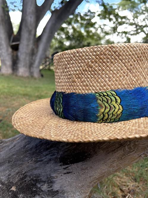 Peacock Pauku