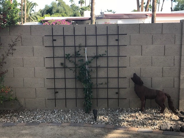 Metal Trellis with Vine