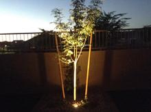 Inground Tree Light