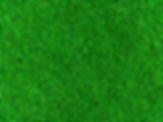 Turf(Small).png