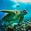 Thumbnail: Mactan Island Hopping Adventure (Tour A)