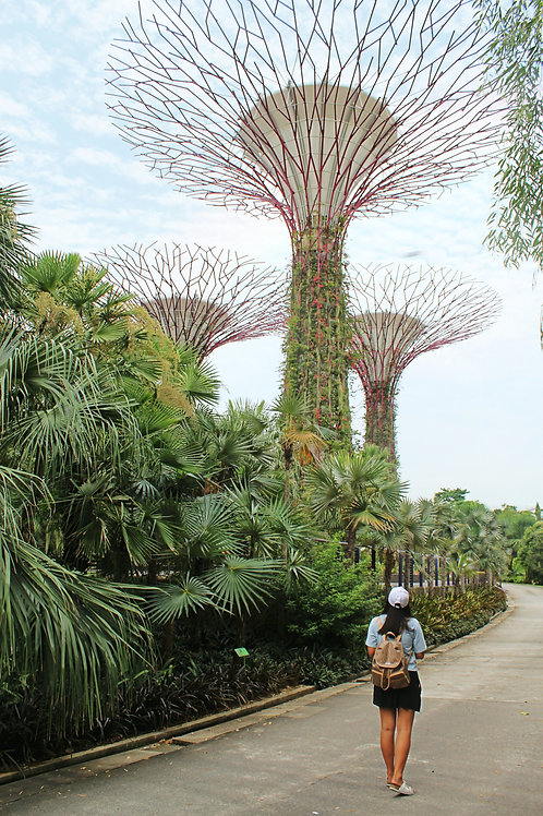Singapore 3D2N Budget Package