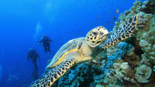 Marine Conservation Philippines – M.C.P Getting a grip on saving the Oceans! Interview with M.C.P fo