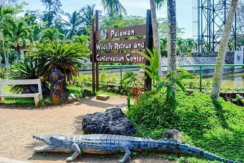4D3N Puerto Princesa Package (Min of 4)