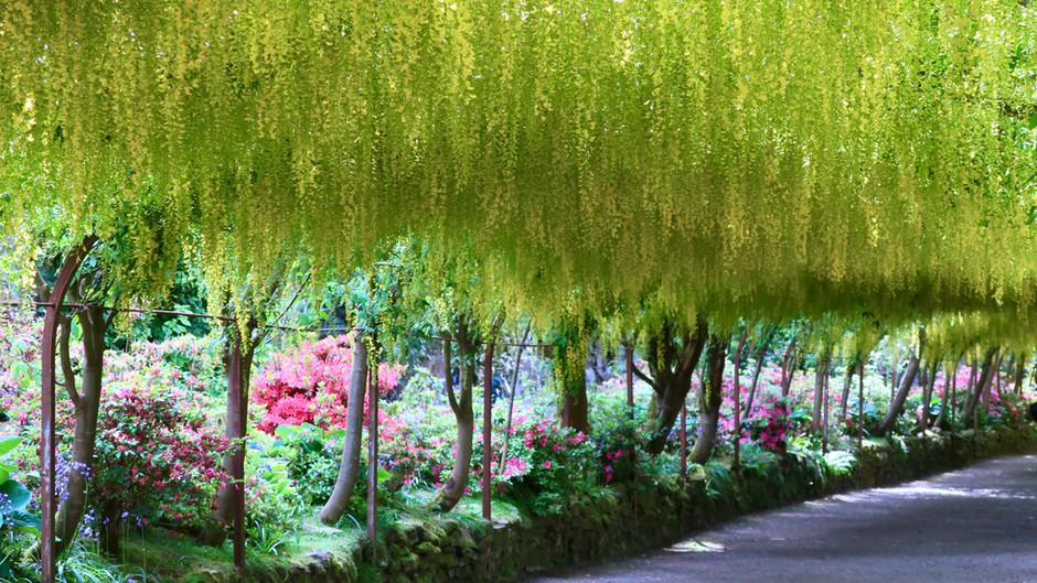 Botanical Beauty: Bodnant Garden