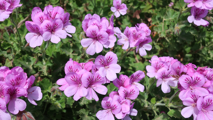 Botanical Beauty: Jardins de Cap Roig