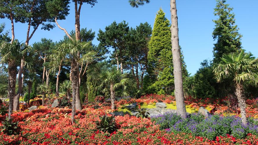 Botanical Beauty: Flor og Fjære