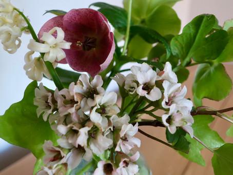 April in my Yorkshire Garden