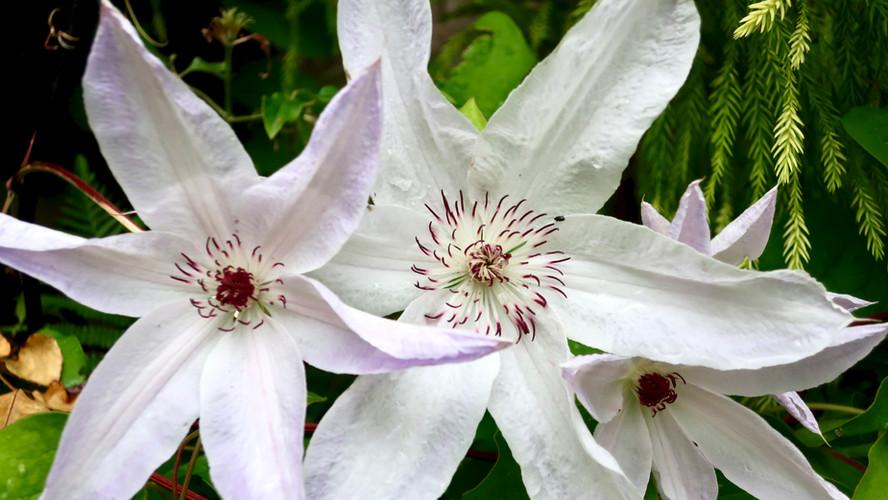 June in My Yorkshire Garden