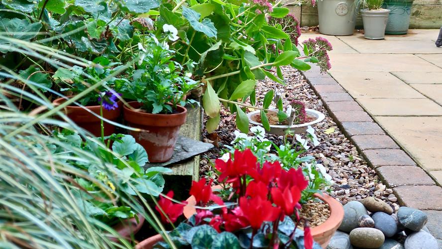 October in the Garden
