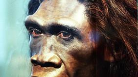 Los ancestros y primos extintos del homo sapiens