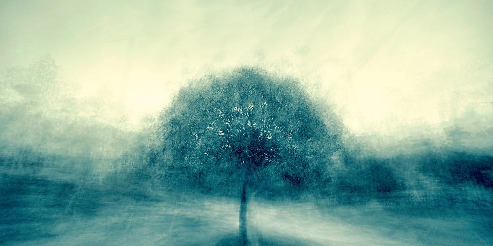 Nature-Based Soul Dreaming -Wendy Robertson Fyfe