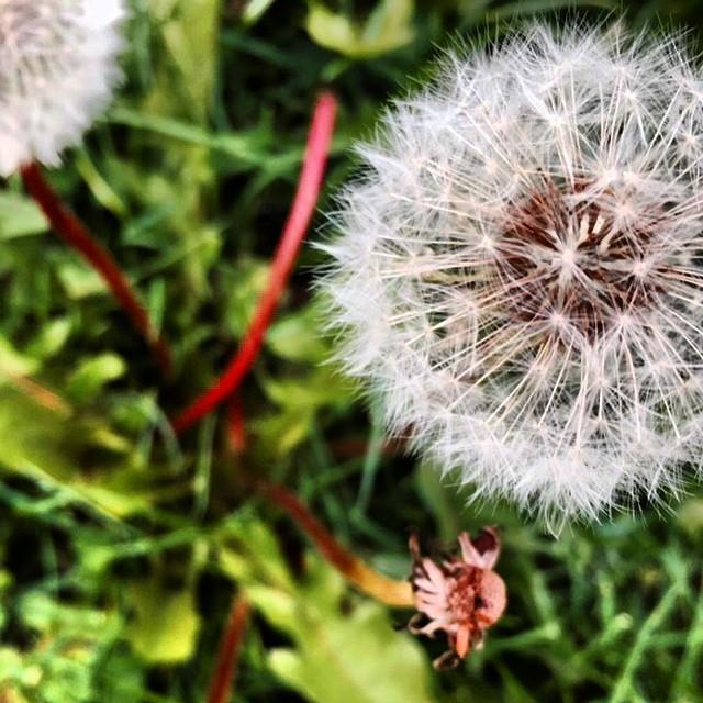 Instagram - #weeds ? #kcgregslooksdown #itsthesmallthings