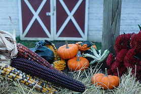 City Ranch Fall Harvest
