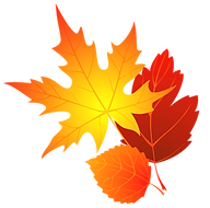 Transparent_Fall_Leaves_Clipart_edited.p