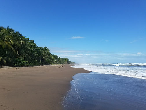 jungle & beach.jpg