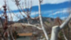 Boulder Tree Pruning