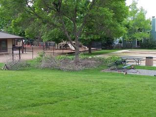 Louisville Park Trees