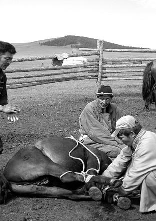 Folk Medicine on the Mongolian Steppe