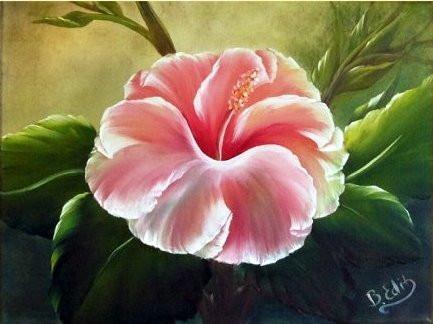 Rózsaszín Hibiszkusz 30x40