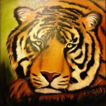 Szomorú tigris 50x50 olaj