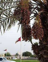 SultanQaboosRoundabout_DatePalmVertical_