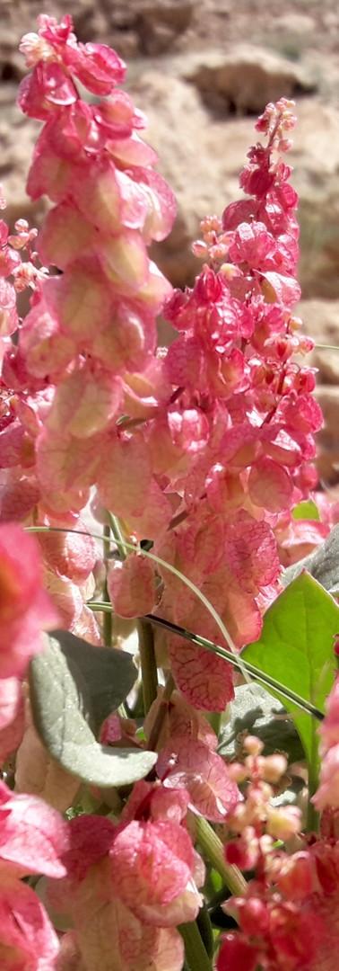 Nuway Plants Pink.jpg