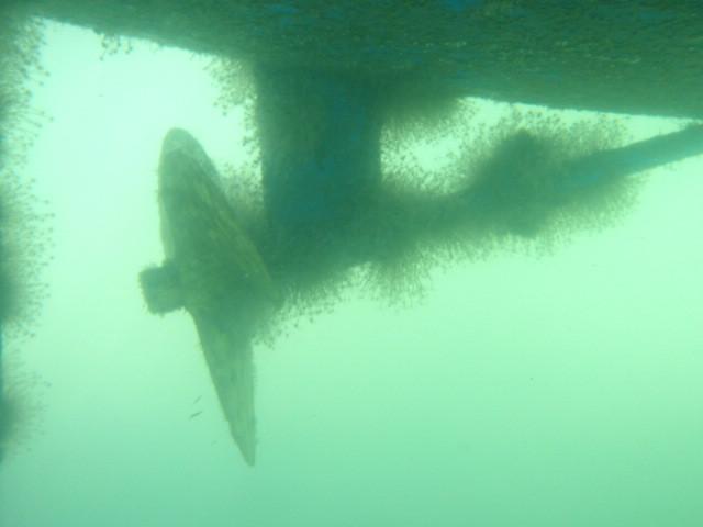 Before underwater clean