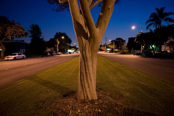 Median Tree