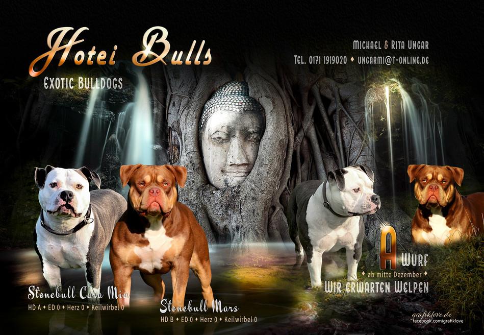 hotei-bulls-welpen-collage-mit-adresse1-