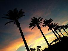 Spotlight Film Productions Palm Trees Sunset Image