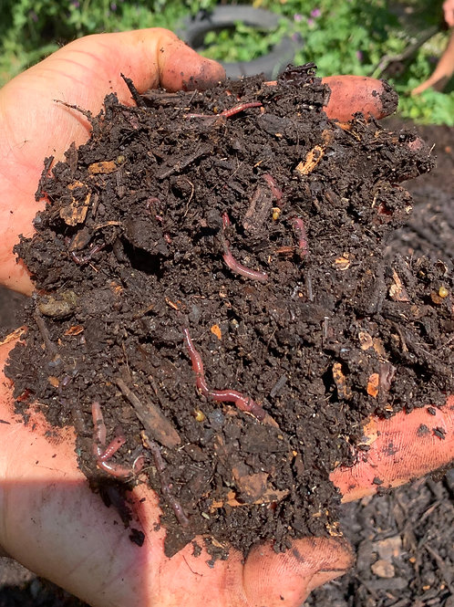 "Mature ""Living"" Compost"