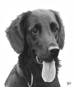 Dog's portrait 2