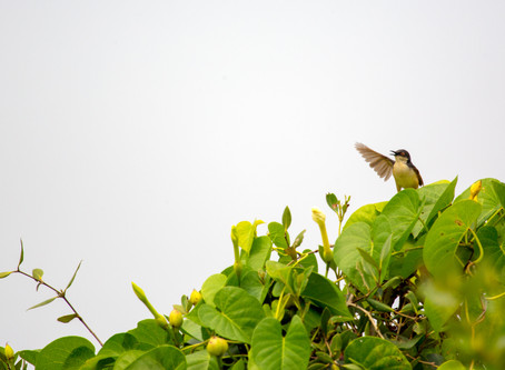 Hey You, Pink Floyd and Ashy Prinia