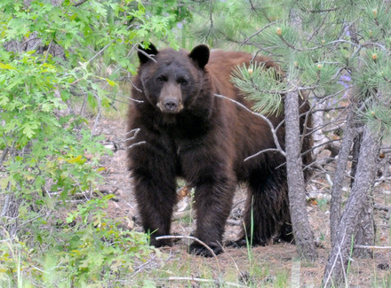 Bear Safety Tips Every Outdoor Active Person Should Know